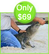 Everglades Tour Special and Gator handling Show